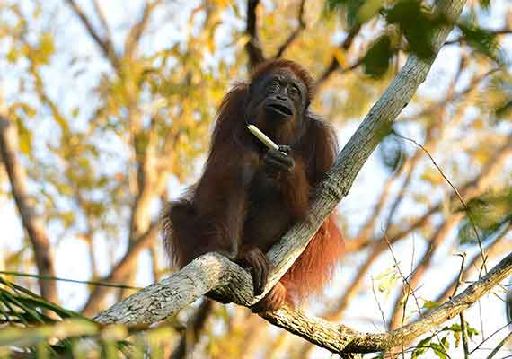 Borneo Nature Tours: Sun, Fun, and Adventure